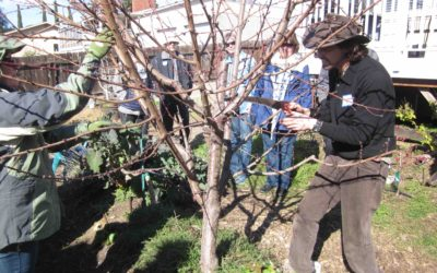 """Barley's Backyard"" Food Forest Tour — Stop #4"