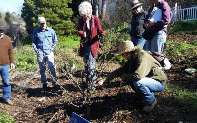 Pruning Workshop Recap
