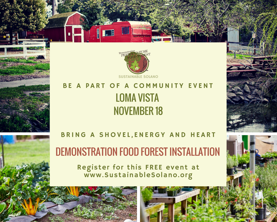 Food Forest Installation Workshop at Loma Vista Farm - IT'S HAPPENING! @ Loma Vista Farm