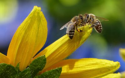 A Victory for Our Bees!