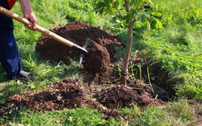 Sustainable Solano Receives Funding For Local Urban Forestry Project
