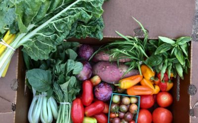 Local Food Reflections from the Sustainable Solano Team