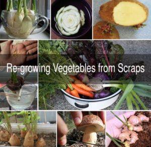 Don't Throw, ReGrow Your Veggie and Fruit Scraps! @ 419 Farragut Avenue