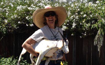 Sustainable Solano Seeks Lead Landscape Designer