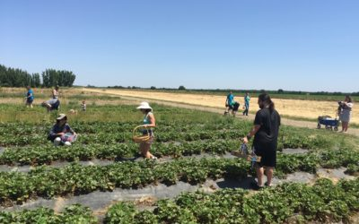 CSA Farm Spotlight: Eatwell Farm