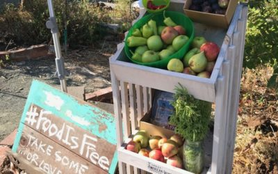Food is Free Benicia Shares Bounty with Foodstand